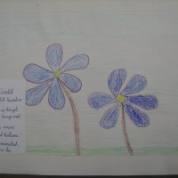 image img_1120-jpg